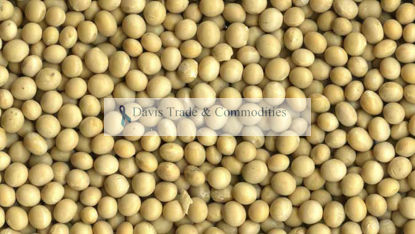 Picture of Soybean