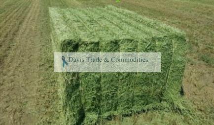 Picture of Alfalfa Hay