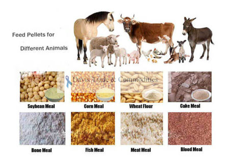 Picture for category Animal Feed