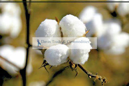 Picture for category Cotton