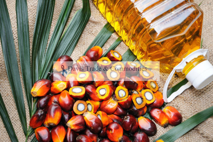 Picture of Palm Kernel Oil